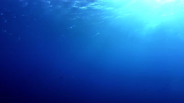 水下生活。藍色深 - 海中 個影片檔及 b 捲影像
