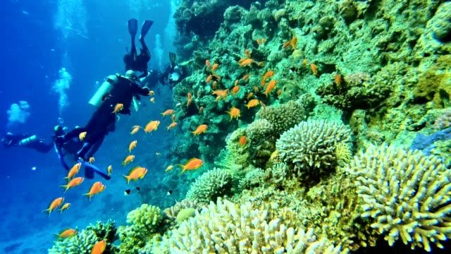underwater life. diving near coral reef - дайвинг стоковые видео и кадры b-roll