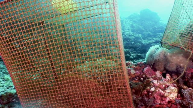 Unterwasser-Marinebiologie wissenschaftliches Umweltforschungslabor – Video