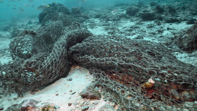 unterwasser-meereslebewesen in ausrangierten ghost net fischernetz gefangen - netzgewebe stock-videos und b-roll-filmmaterial