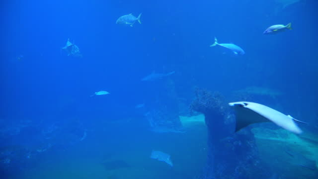 vídeos de stock e filmes b-roll de underwater on ground level with shark and stingray - uge