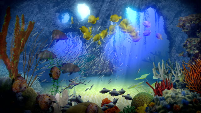 Underwater Paradise Animation of an idylic ocean wonderworld with multiple schools of fish swimming in a reef with underwater caves, coral, seaweed, and sunrays hitting a sandy ocean floor. reef stock videos & royalty-free footage