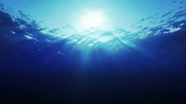 Underwater - perfect shot video