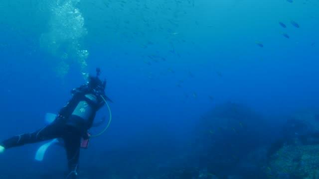 underwater reef, japan - дайвинг стоковые видео и кадры b-roll