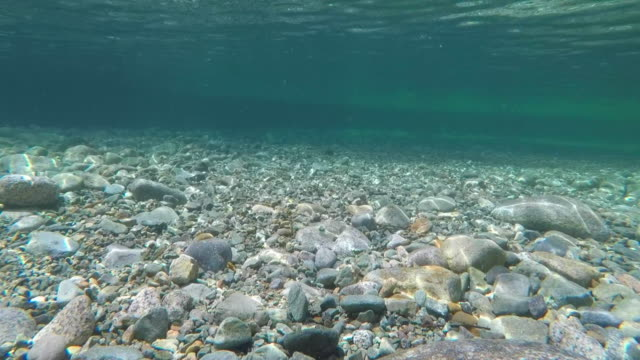 underwater riverbed clear water river rocks - poco profondo video stock e b–roll