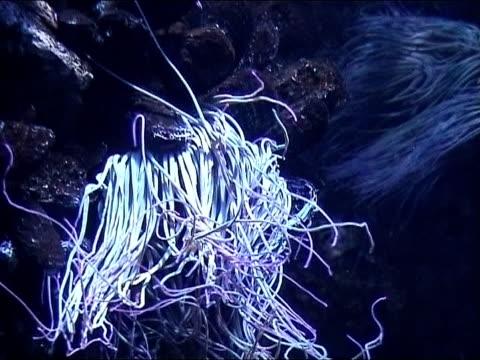 Underwater scene anemone video