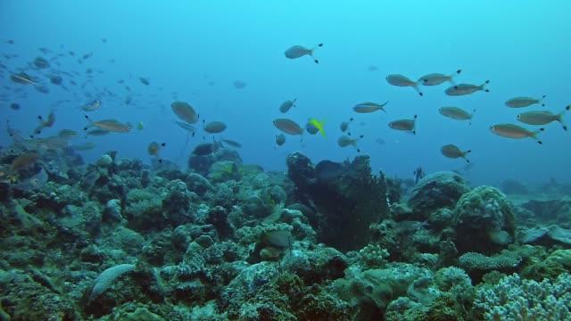 underwater scen koraller och fiskar i nosy vara madagaskar - madagaskar bildbanksvideor och videomaterial från bakom kulisserna