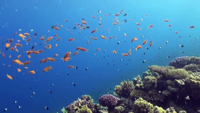 underwater sea landscape of tropical coral reef. - mały filmów i materiałów b-roll