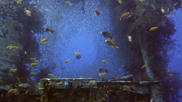 underwater shipwreck in the red sea - кораблекрушение стоковые видео и кадры b-roll