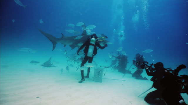 Underwater shooting, of expert divers who take pictures and videos in the middle of the sharks. Underwater shooting, of expert divers who take pictures and videos in the middle of the sharks. Concept of: exploration, vacations, snorkeling, exotic places, divers, sharks. aqualung diving equipment stock videos & royalty-free footage
