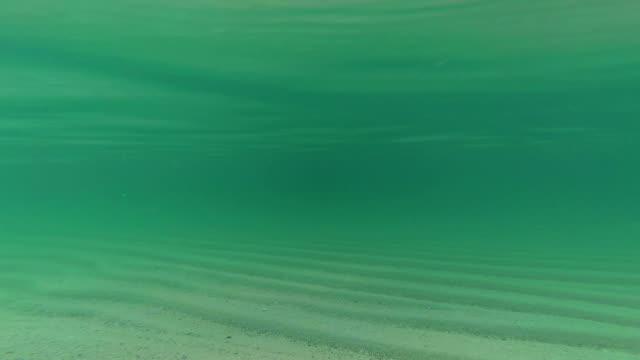 Underwater snapshot sea video