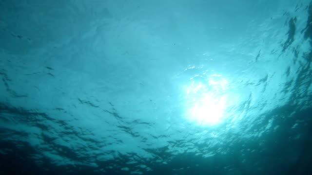 水中 - 海中点の映像素材/bロール