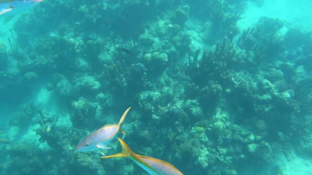 stockvideo's en b-roll-footage met onderwater meningvissen die rond zandig ertsader in keerkringen zwemmen - providenciales