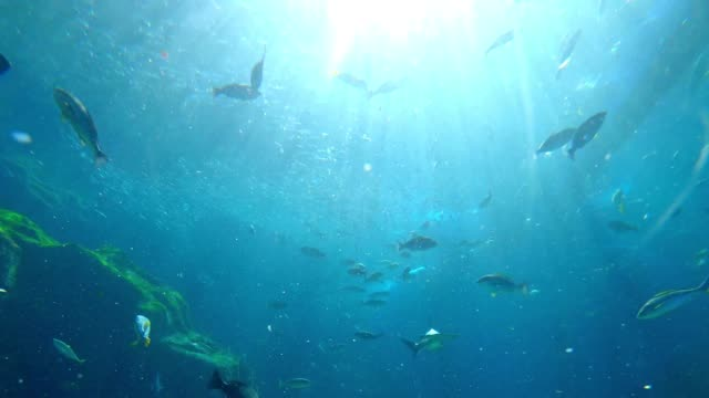 underwater view for school of fish - луциан стоковые видео и кадры b-roll