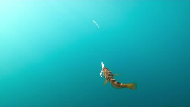 unterwasseransicht eines kleinen fisches, der an einen angelköder gehängt ist - angelhaken stock-videos und b-roll-filmmaterial