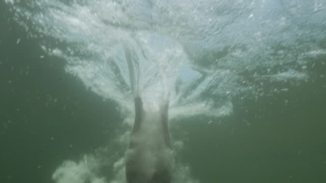 4k slo mo: underwater view of man diving into body of water - lakes stock videos and b-roll footage