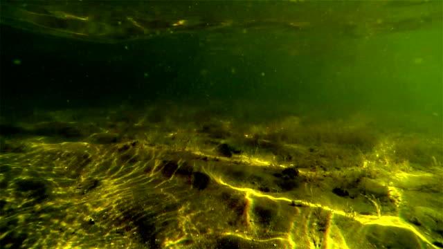 Poisson D\'eau Douce – Vidéos libres de droit 4K - iStock