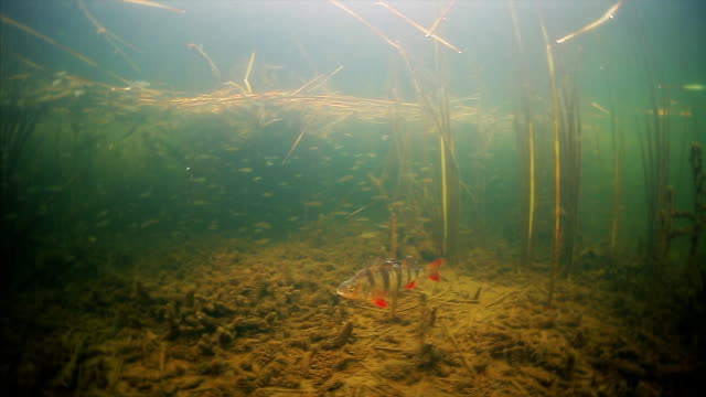 Underwater view of the lake video