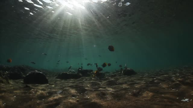 underwater view of the sandy sea bottom - poco profondo video stock e b–roll