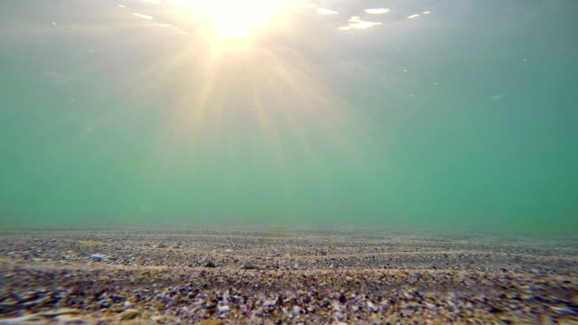 Underwater view of the sea surface video
