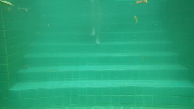 Underwater View Of woman Diving Into Swimming Pool video