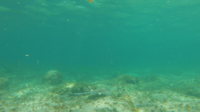 stockvideo's en b-roll-footage met onderwater view sting ray in helder tropisch water - providenciales