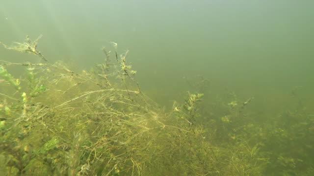 vídeos y material grabado en eventos de stock de río volga submarino - charca