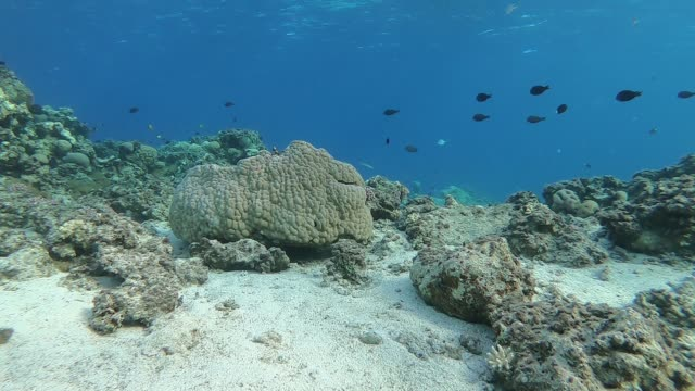 Underwater world of the Red Sea in Egypt A video clip of the corals and fish of the Red Sea in Dahab, Egypt. Taken with a GoPro. diving to the ground stock videos & royalty-free footage