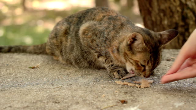vídeos y material grabado en eventos de stock de felino salvaje - vibrisas