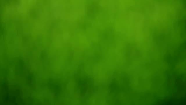 非集束緑色の背景。 スライダのショット - 花壇点の映像素材/bロール