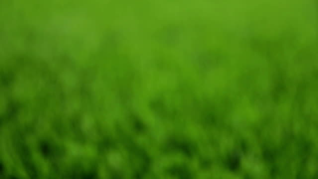 Unfocused green background. Slider shot video