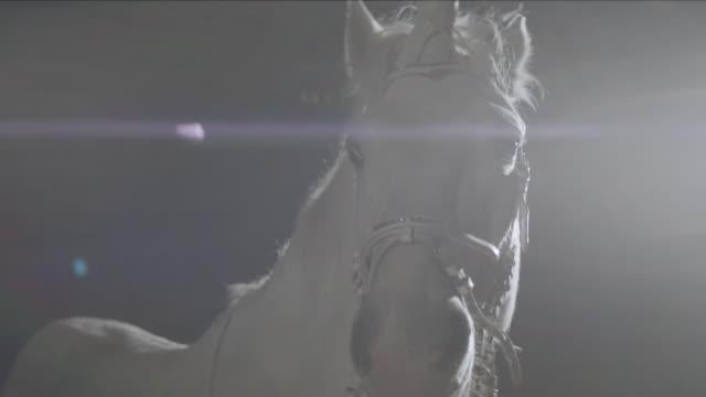unicorno. cavallo bianco al buio. primo piano testa di cavallo. - stallone video stock e b–roll