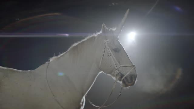Unicorn. White Horse In The Dark.