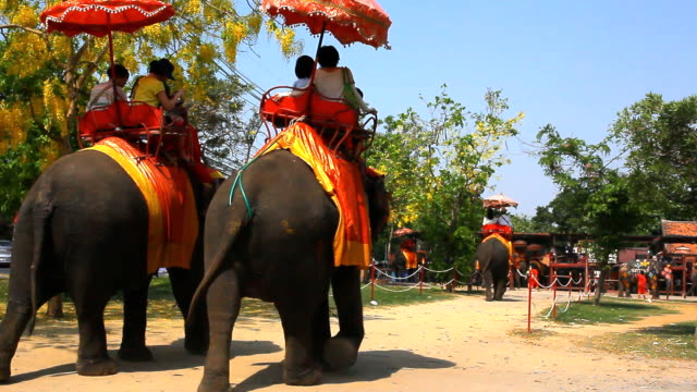 Unidentified tourists ride on elephant video
