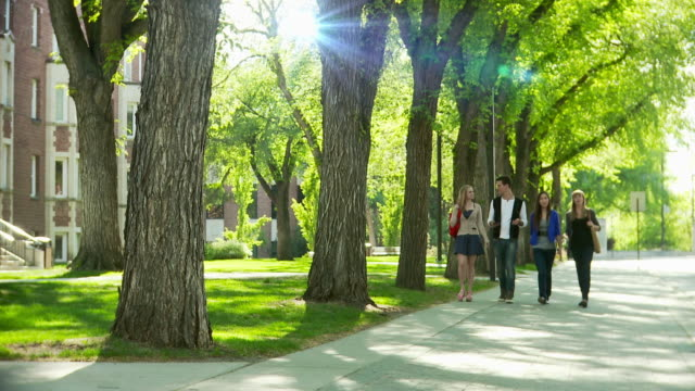 University students walk on campus University or college students walk on campus under large old trees an amongst the old landmark buildings.  They chat as they talk and create life lasting bonds and friendships. campus stock videos & royalty-free footage