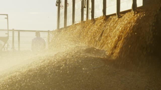 vídeos de stock, filmes e b-roll de colheita de milho ls zo descarga de um trailer - culturas