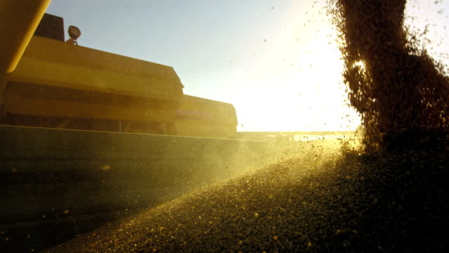 Unloading Wheat Grain video