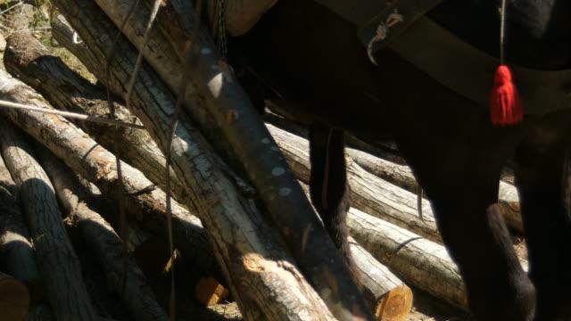 Unloading wood logs from mule