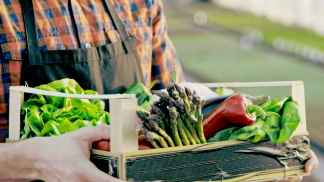 SLO MO Unrecognizable farmer holding a crate full of vegetables video