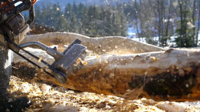 unrecognizable man grinding log with electric saw in sunny winter forest. carpenter processes a piece of wood for a building project. construction works with a wooden structure. slow motion close up - segatura video stock e b–roll
