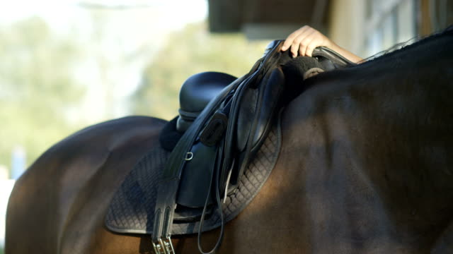 SLOW MOTION CLOSE UP: Unrecognizable person saddling up a big dark horse video