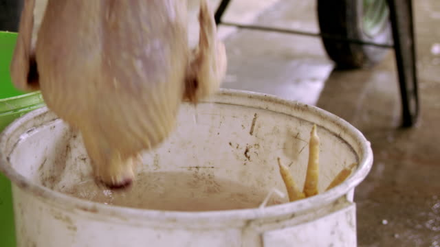 SLO MO Unrecognizable person throwing slaughtered chicken into water
