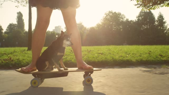 LENS FLARE: Unrecognizable woman skateboarding with adorable miniature pinscher. CLOSE UP, LENS FLARE: Unrecognizable woman skateboarding with adorable miniature pinscher on a beautiful sunny summer day. Senior dog sitting on the longboard and cruising through the park with girl. effortless stock videos & royalty-free footage