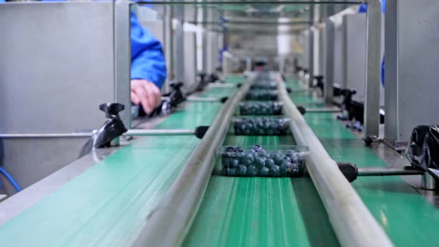 Unrecognizable womans working on production line in factory. Packing soft fruits.