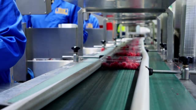 Unrecognizable womans working on production line in factory. Packing soft fruits. Unrecognizable womans working on production line in factory. They sorting fruits on automated scale and put plastic containers with fruit on automatic production line for packaging. Packing fruits. production line worker stock videos & royalty-free footage
