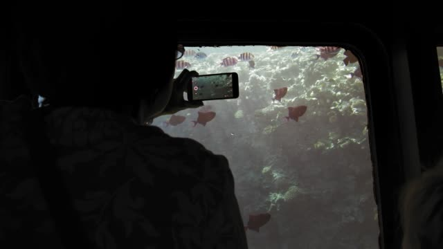 Unrecognized silhouette of a senior female adult tourist aboard a submarine photographs on a mobile smartphone a flock of colorful fish against a background of coral reefs. Slow Motion