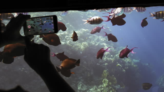 unrecognized silhouette of a tourist hands on an underwater ship studies, views and photographs a flock of colorful fish against a coral reef on a mobile smartphone. Close-up. The concept of protecting the ocean and the environment from pollution. Slow