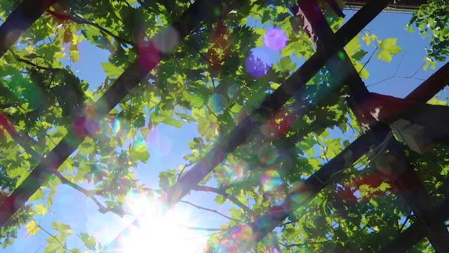 ブドウ畑の熟したブドウ果実 - 熟していない点の映像素材/bロール