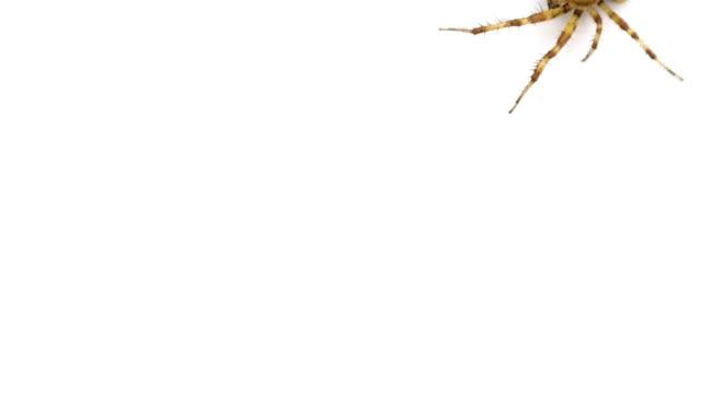 Unusual logo. Spider crawls on isolated white background
