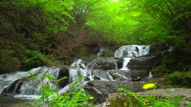 uodome 滝軽井沢、群馬県で - 清潔点の映像素材/bロール